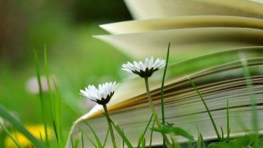 Book laying open in the field